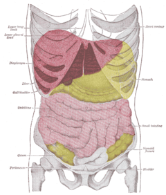 Abdominal Pain Upper Right Quadrant http://thecinematologist.blogspot.com/2009/12/spare-ribs.html