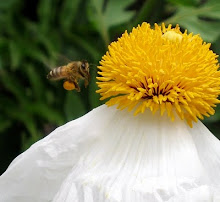 "Dears, prepare to ""bee"" delighted at ""The Art of Living Beautifully."""
