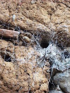 Mexican Tarantula spiderweb in an adobe wall at Tepoztlán, Morelos, México