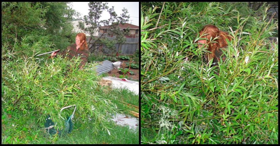 tree grass junk man - photo #33