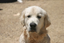 My dog Jimmy