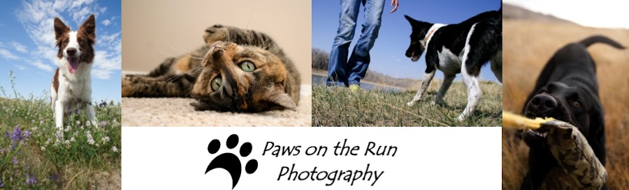 Paws on the Run Photography