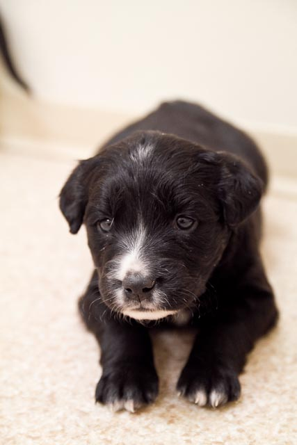 animal+shelter+ +Feb+26 24 Puppies, Puppies and More Puppies