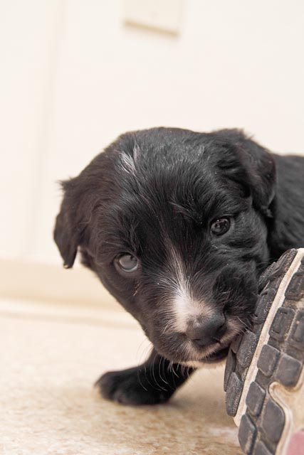 animal+shelter+ +Feb+26 38 Puppies, Puppies and More Puppies