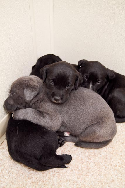 animal+shelter+ +Feb+26 40 Puppies, Puppies and More Puppies