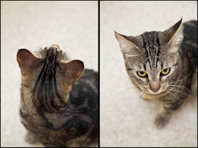 head Fun at the Shelter