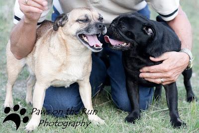 IMG 5081 Pug Happiness