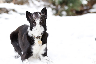 Lily+snow 6 >Fetching Machine