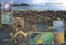 Singapore Has World Class Reefs