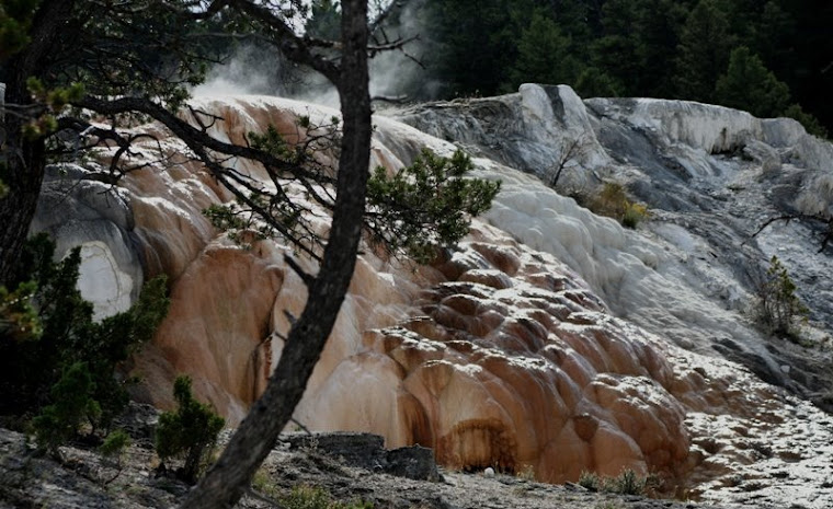 Mammoth Hot Springs in Yellowstone Park 2007 (yellowstone park in its majesty aug img )