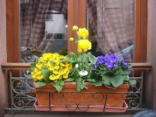 Trucs et astuces pour fleurir vos fenêtres et balcons de manière écologique, économique et original
