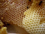 Honey Honey In Culture And Folklore | RM.
