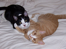 George & Millie, my Furry Babies!
