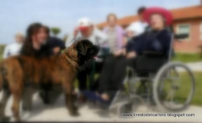 Blog Sul Cane E I Cuccioli Luglio 2009