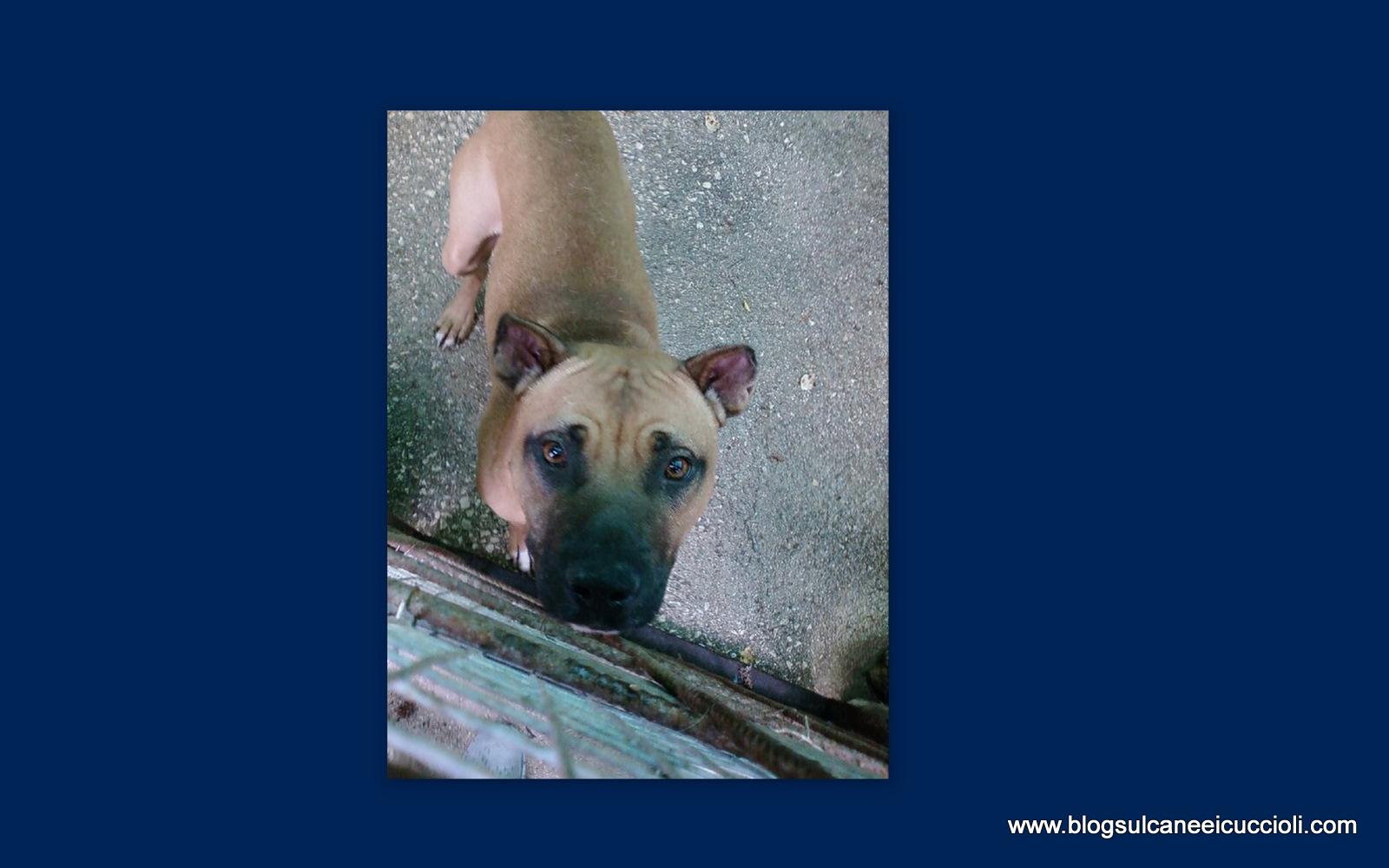 Blog Sul Cane E I Cuccioli Qualcuno Vuole Adottare Brad Pit