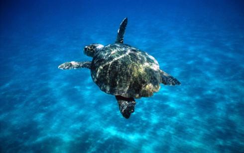 Il mondo di j le tartarughe si inquinano per sopravvivere for Tutto per le tartarughe