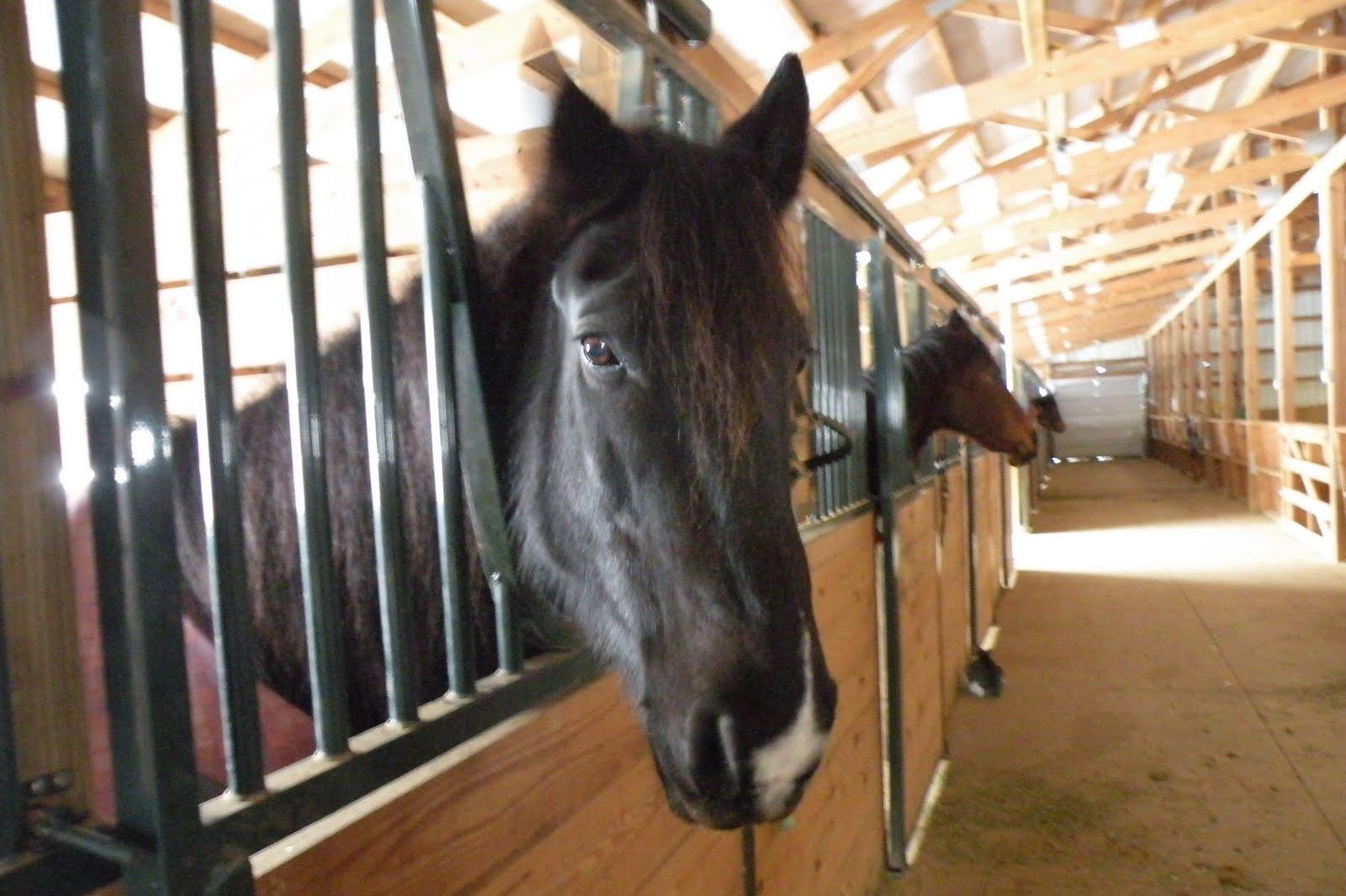 Story Barn Family Horse Barn