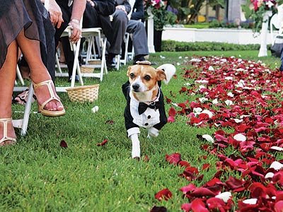 incorporating dog into wedding cinderella centerpieces for weddings