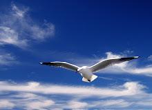 Libertatea....