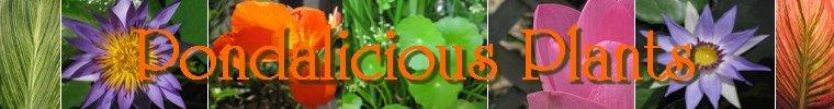 pondalicious-plants