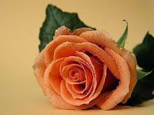 """"""" la rosa de la amistad para mi amiga"""""""