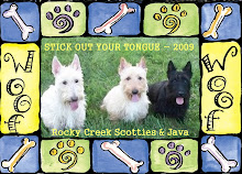 Gotta Love Those Scotties!