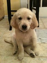 Meet Lucy - Jul 10
