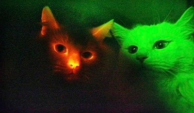 glowing cats
