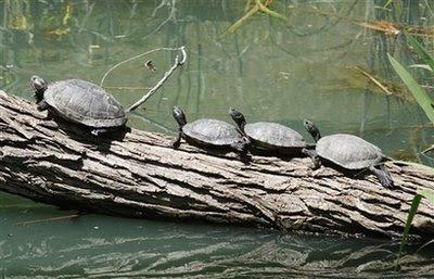 animals: turtles