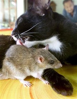 Animals and pets: cat - mouse