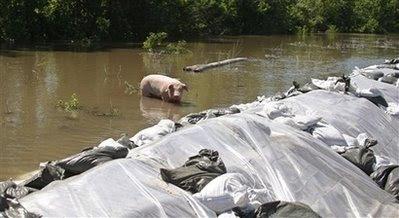 pets: pig.