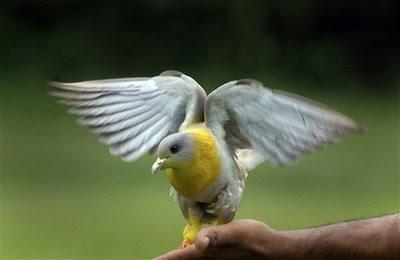 Pets: pigeon.