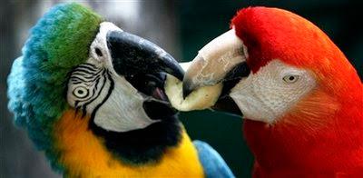 Animal: macaw.