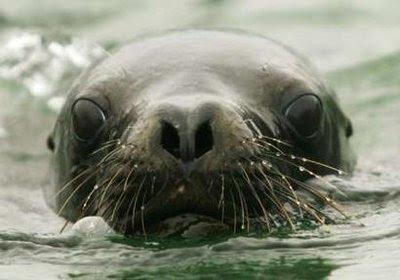 Animals: sea lion.