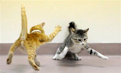 Pets:cats