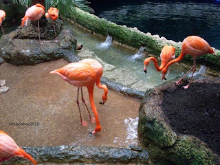 Get Out There And Do Something In Dfw Dallas World Aquarium