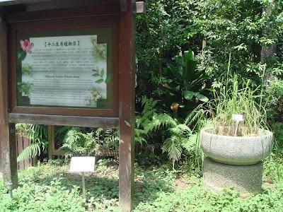 Chinese Zodiac Plant