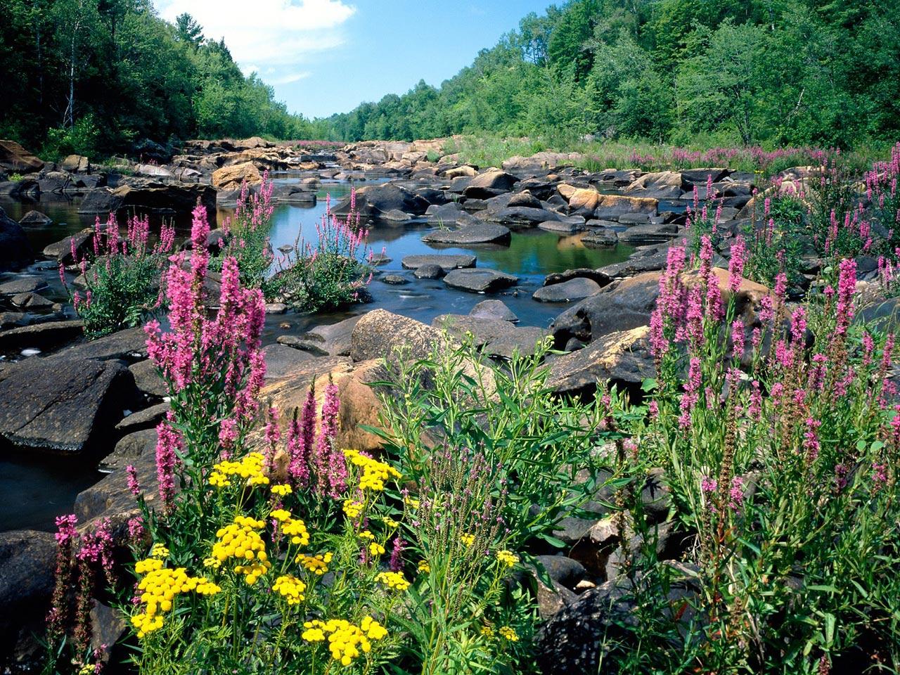 http://4.bp.blogspot.com/_FQx4JXMzHVQ/TMcmSPtRemI/AAAAAAAAB5g/LbjLQFt10Fg/s1600/Wisconsin_River%252C_Ice_Age_National_Scientific_Reserve%252C_Wisconsin.jpg