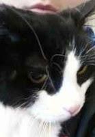 Cat Adoption Craigslist Baton Rouge