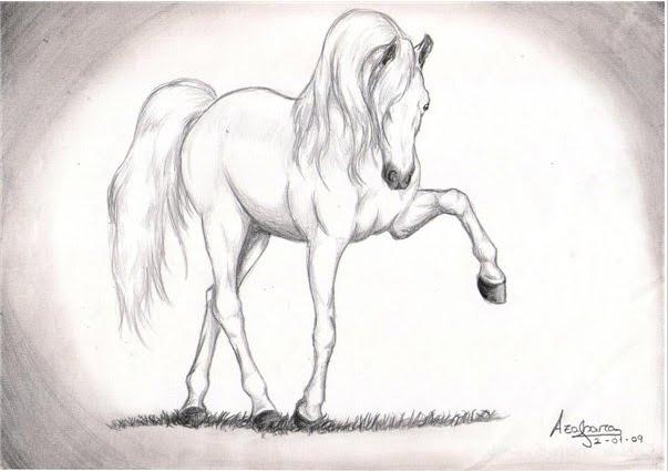 CaballoSara Club Hípico Titú: Dibujos de caballos