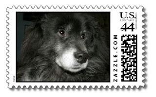black chow chow shiba inu mix postage stamps