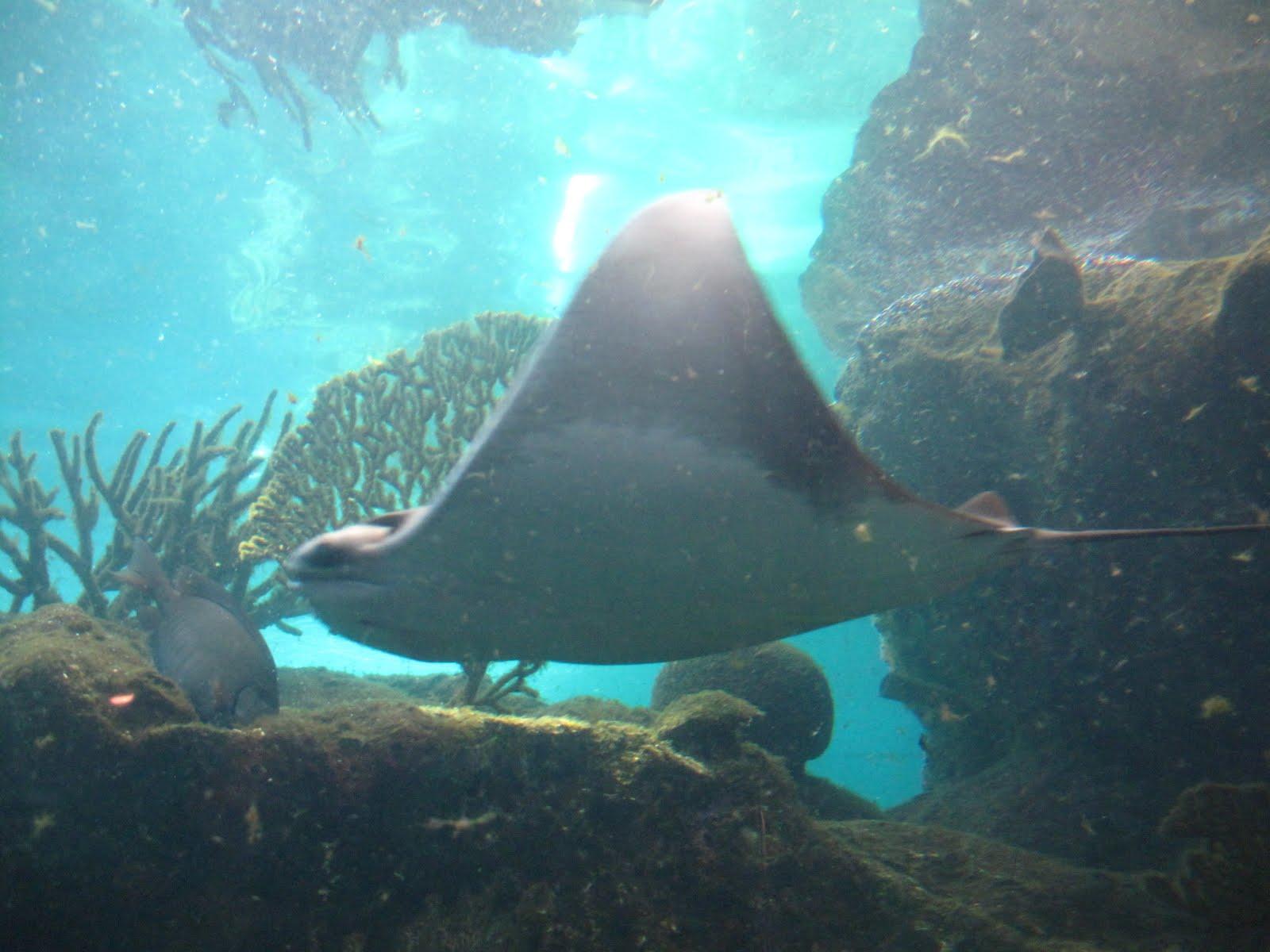 Seek Aimee Travel New York Aquarium Brooklyn Ny