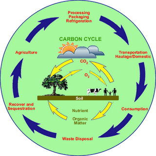 Carbon Cycle Pearson Education