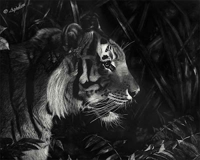 Cathy Sheeter - Scratchboard Wildlife and Western Artist and Photographer
