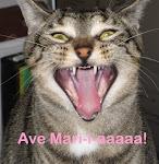 Cat pix
