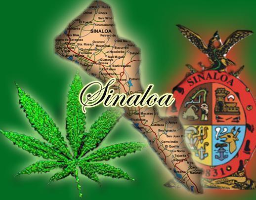 cartel de sinaloa. de drogas en Sinaloa