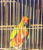 aves de estimação são oriundas de criadouros aprovados pelo Ibama