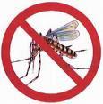 Combata o Mosquito da Dengue