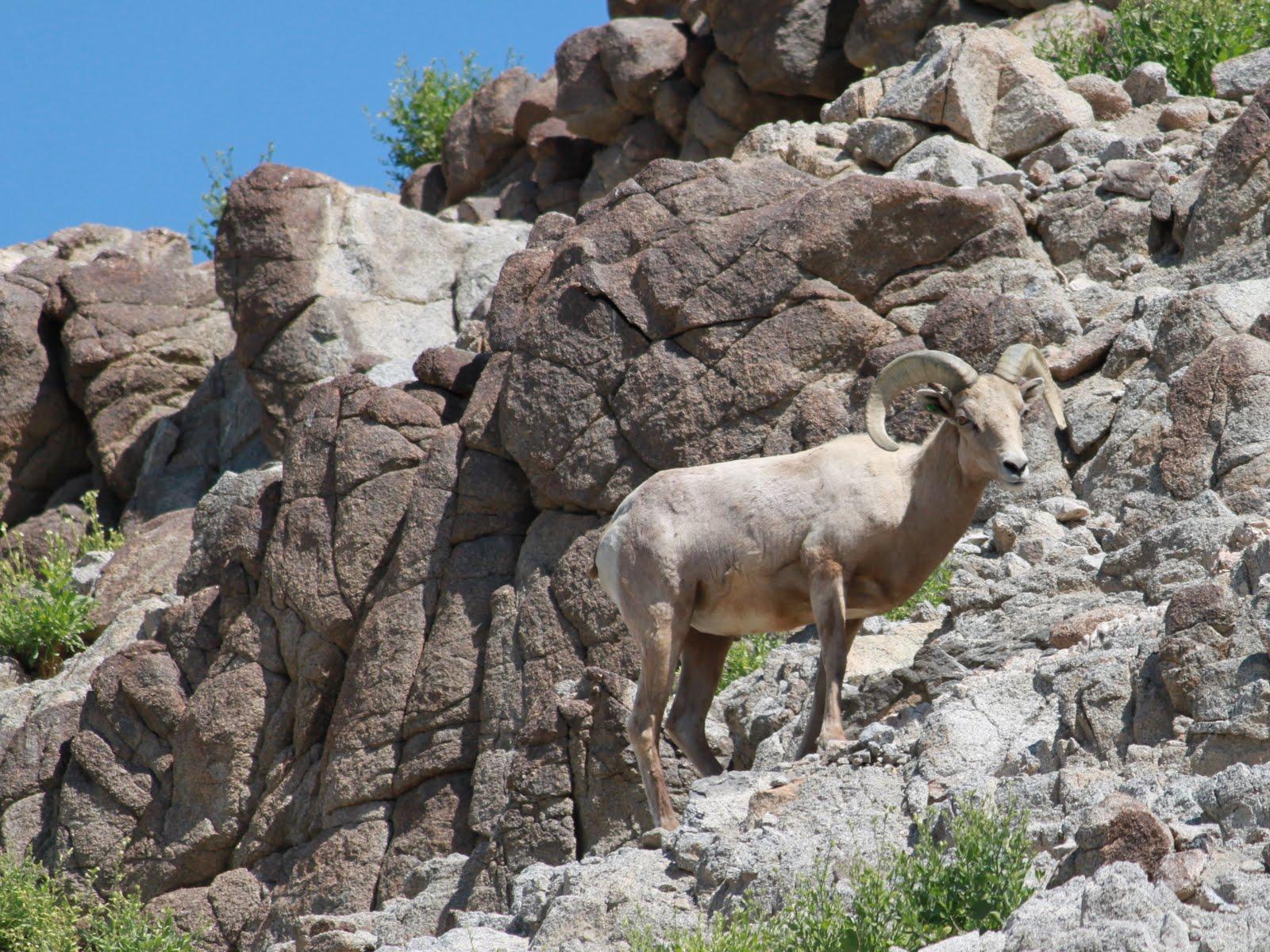 Amor and Amoret: Living Desert Animals