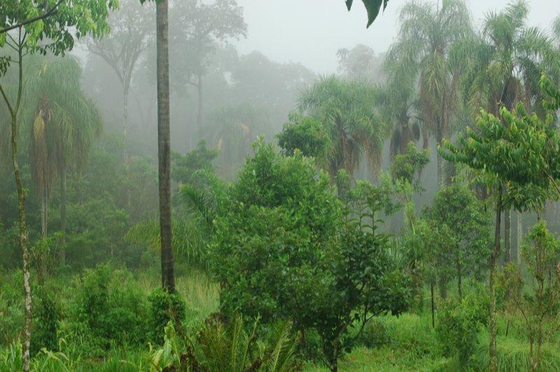 Selva Nativa Misionera